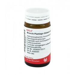 Bronchi Plantago globuli 20 g farmaco omeopatico contro la bronchite